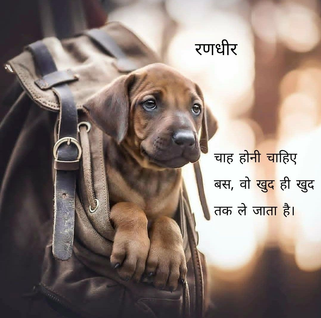 Randhir Zala Dog Portraits Cute Dogs Dogs And Puppies