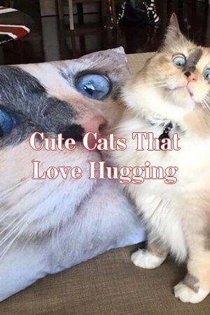 Rachel Sanderson Tells About Cute Cats That Love Hugging   #catbreeds  #catlover  #world  #dogs  #Adult  #Choose  #catcondo  #Patterns