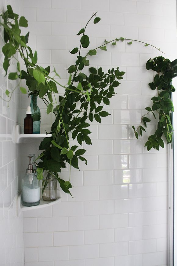 Turning Your Shower Space Into A Sanctuary Shower Plant Bathroom Plants Plants