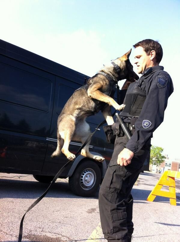 Look At That Jump Nika From Ottawa Police K9 With Her Police