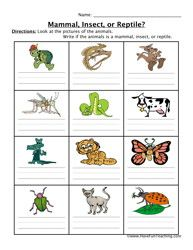 Mammal Insect Reptile Worksheet Science Pinterest