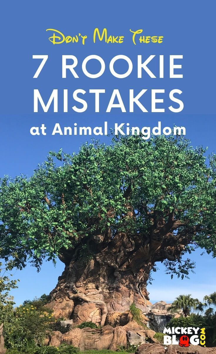 Rookie Mistakes to Avoid at Animal Kingdom - MickeyBlog.com
