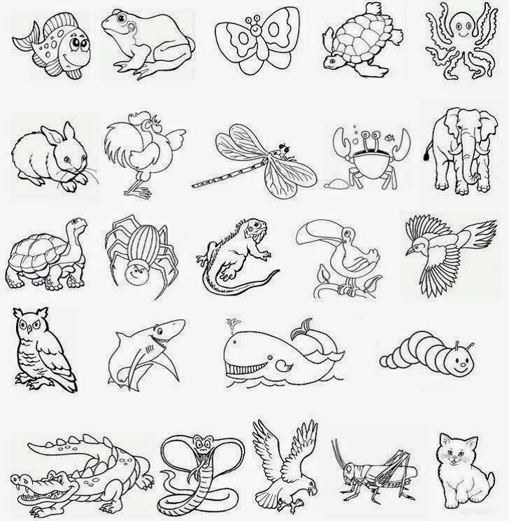 Imagenes De Animales Terrestres Acuaticos Y Aereos Animalia