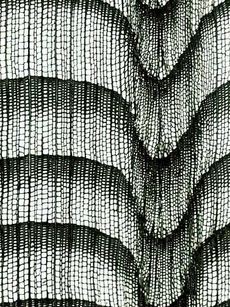 Abies Alba Sapin Anatomie Du Bois Microscopique Textile