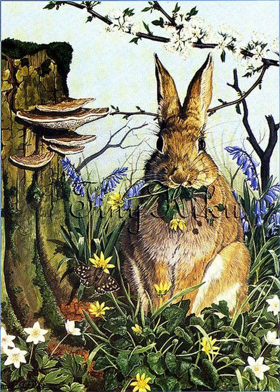 RABBIT Feeding On WILD FLOWERS, Vintage #517.  Art Print, Fabric Block, Heat Transfer or Waterslide #wildflowers