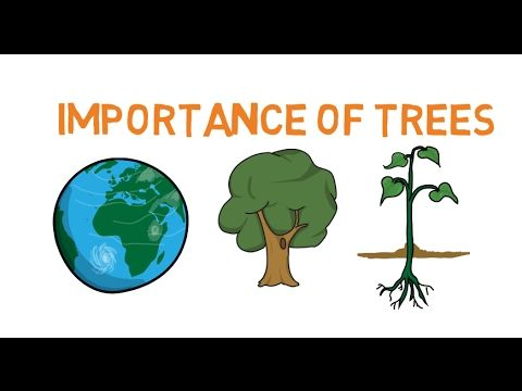 Importance Of Trees Facts About Trees For Kids Why Do We Need Trees Importance Of Trees Trees For Kids Tree Essay