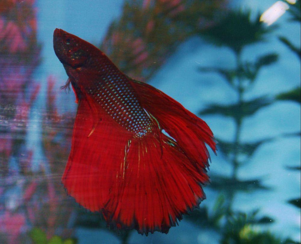 Aquarium Salt For Betta Fish