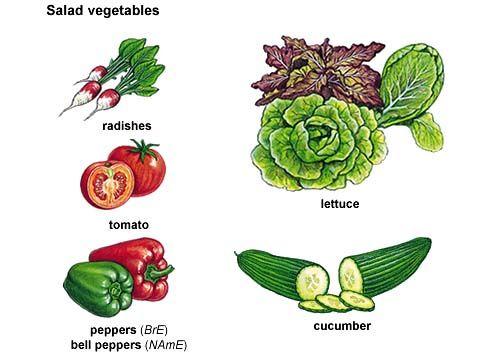 Vegetables Used For Salad Google Search Salad Vegetable Salad
