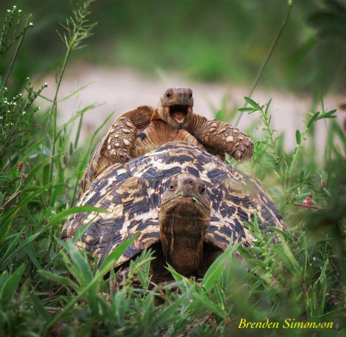 GALERINHA INFANTIL: Fofuras animais em fotos: Prêmio revela imagens hi...