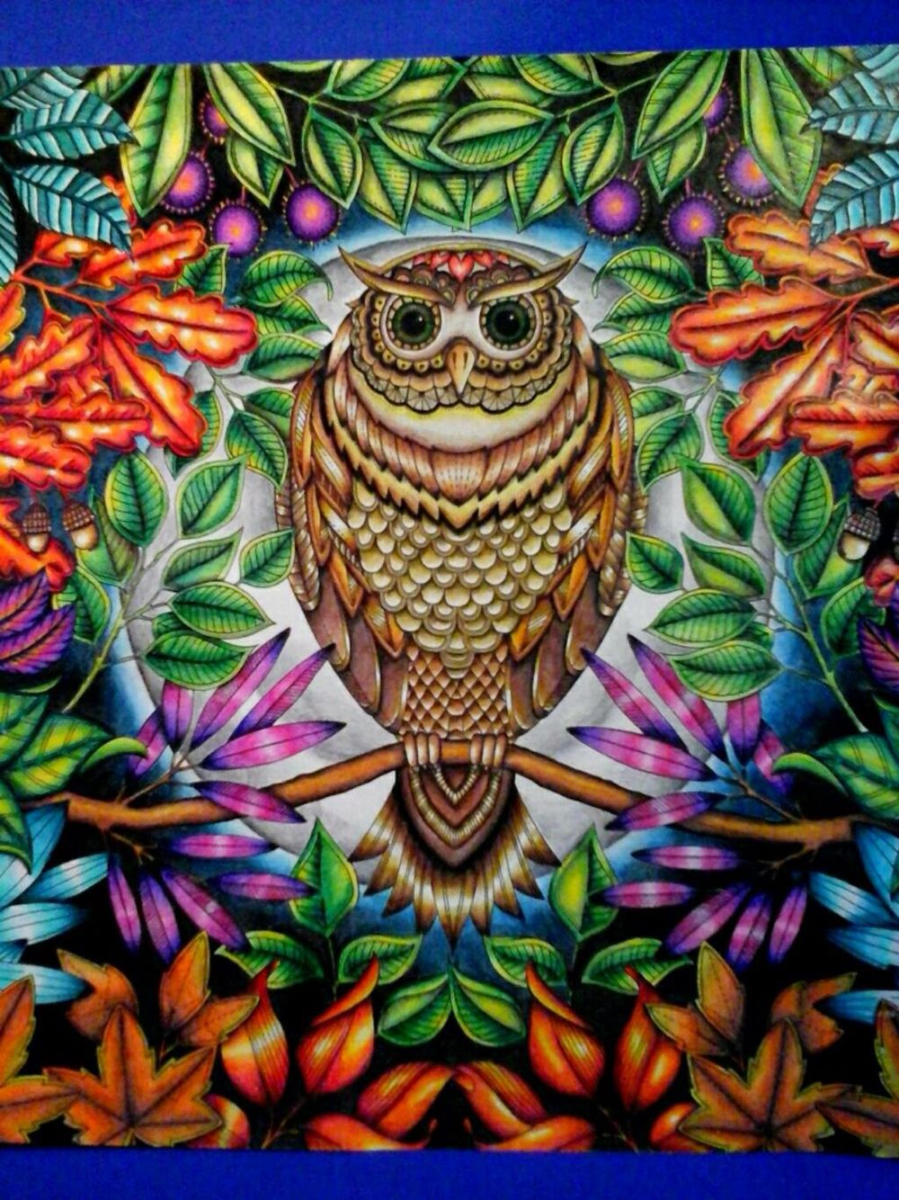 Owl Secret Garden Coruja Jardim Secreto Johanna Basford Secret Garden Colouring Basford Coloring Book Secret Garden Coloring Book