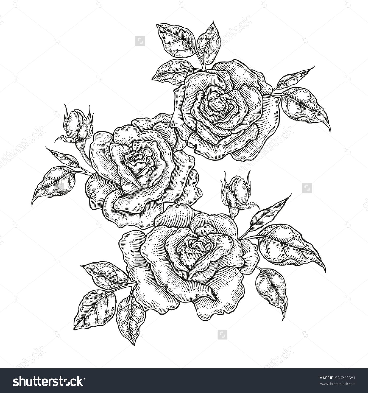Hand drawn vector flowers. Vintage floral composition, rose flowers and leaves isolated on white background. Illustration engraved