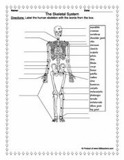 label the major bones in the human body education station science pinterest human. Black Bedroom Furniture Sets. Home Design Ideas