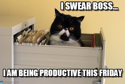 Funny Cat Meme About Work : We re all working hard to stay focused today tgif fridayhumor