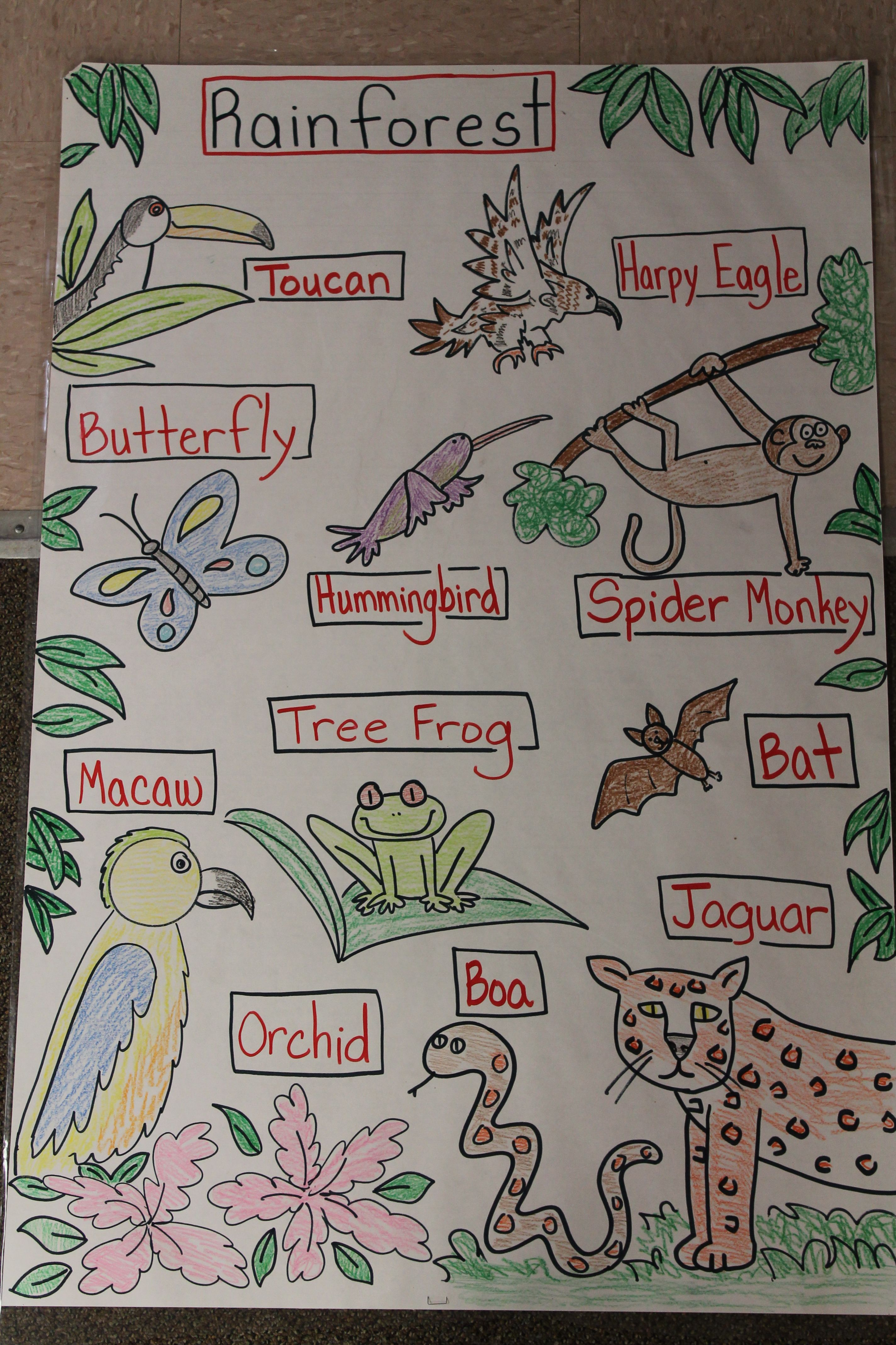 Draw And Label The Rainforest As Kids Copy And Talk About