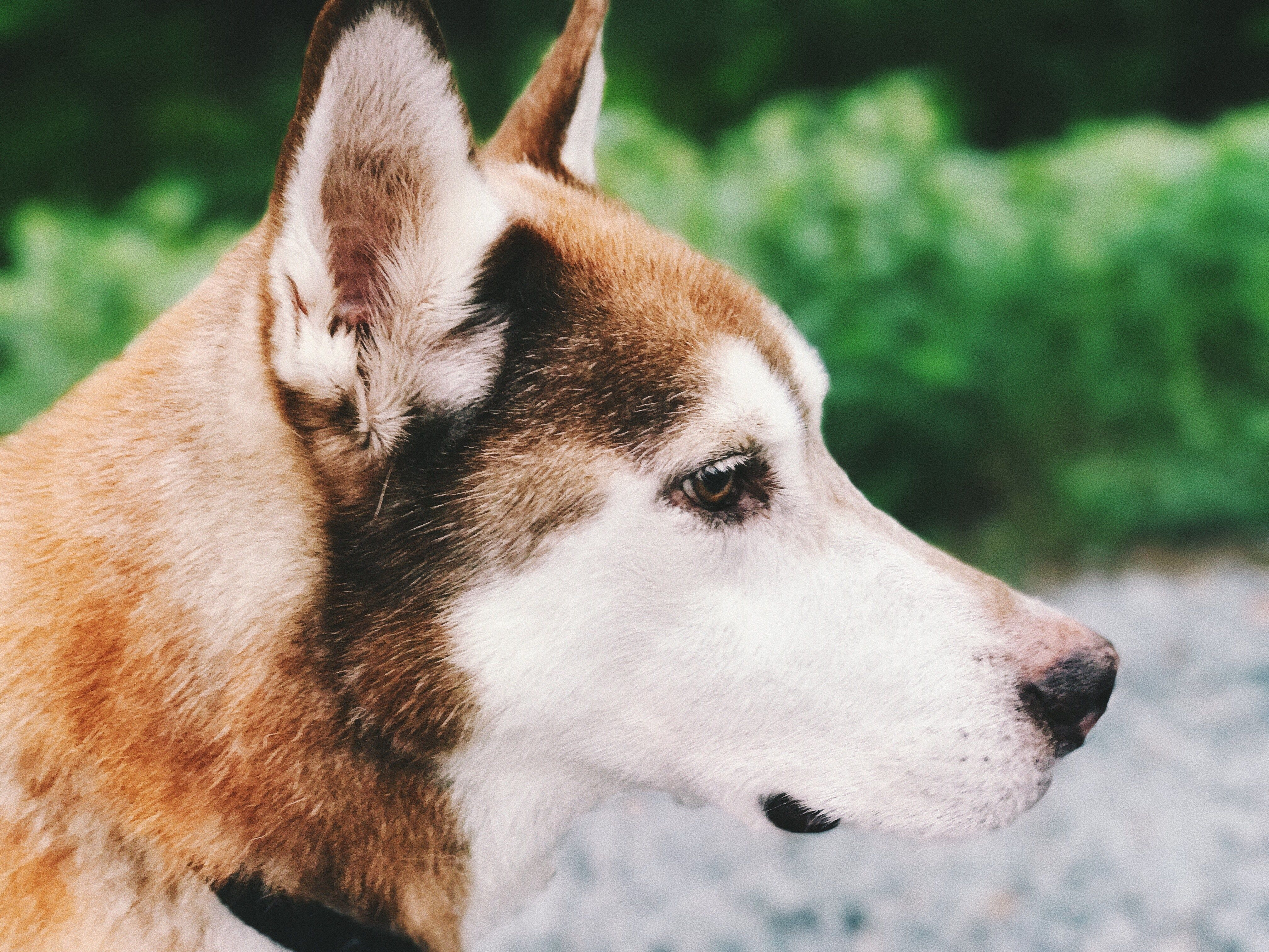 5 THINGS I LEARNED FROM MY DOG - Italican Life