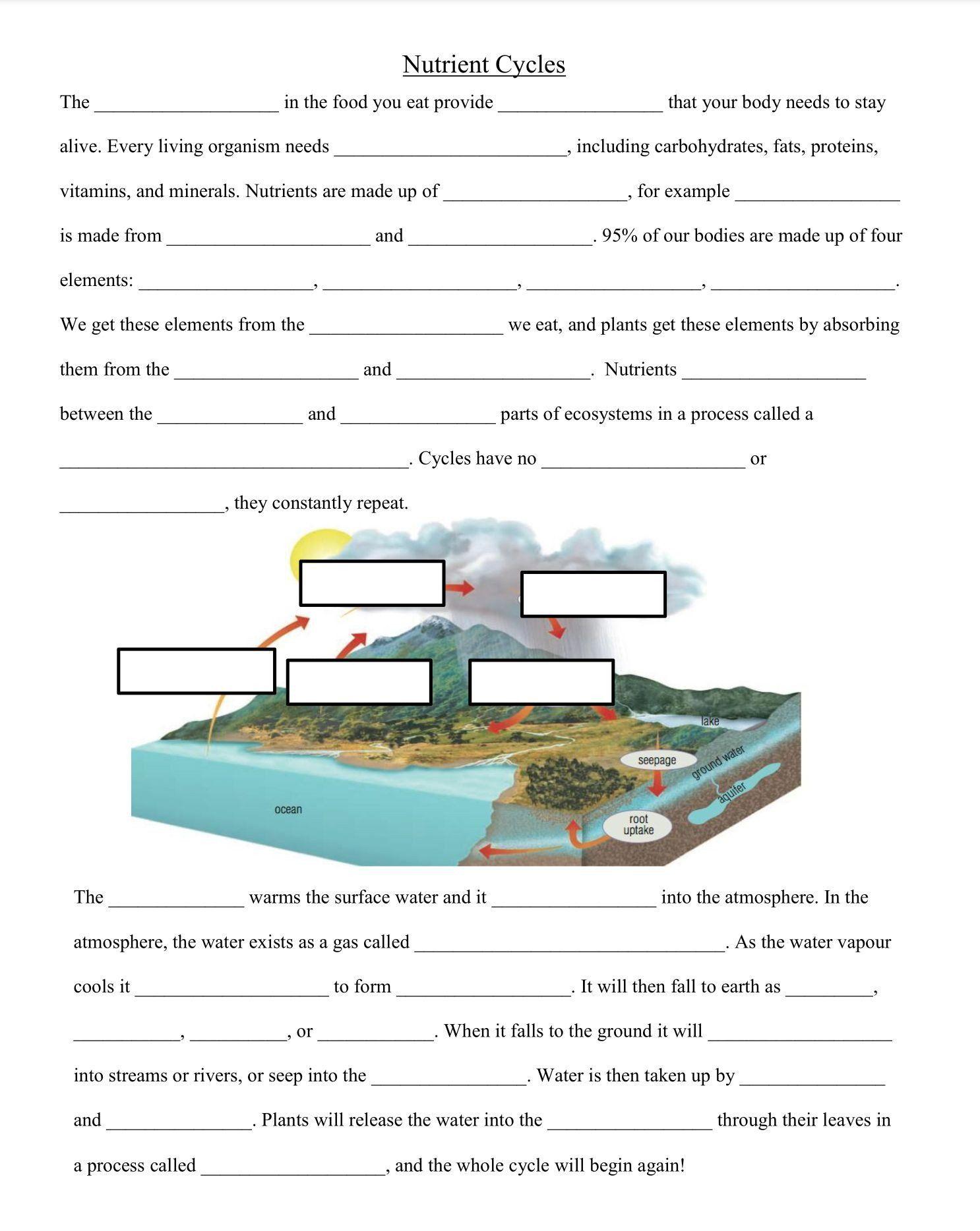 Types Of Rocks Worksheet Nutrient Cycles Worksheet