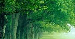 الأخضر البيت الأخضر الحامل الرجل الفتاة العزباء اللون الأخضر اللون الاخضر بالمنام اللون الاخضر في المنام اللون الاخ Natural Landmarks Northern Lights Landmarks