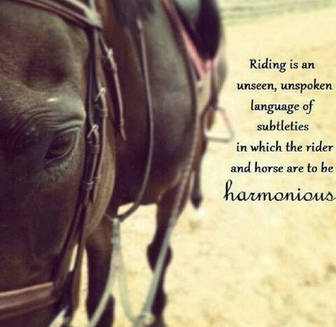 So true | Giddyup!! | Horse jumping quotes, Horses, Equine ...