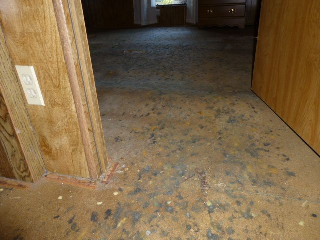 Moldy particle board sub floors