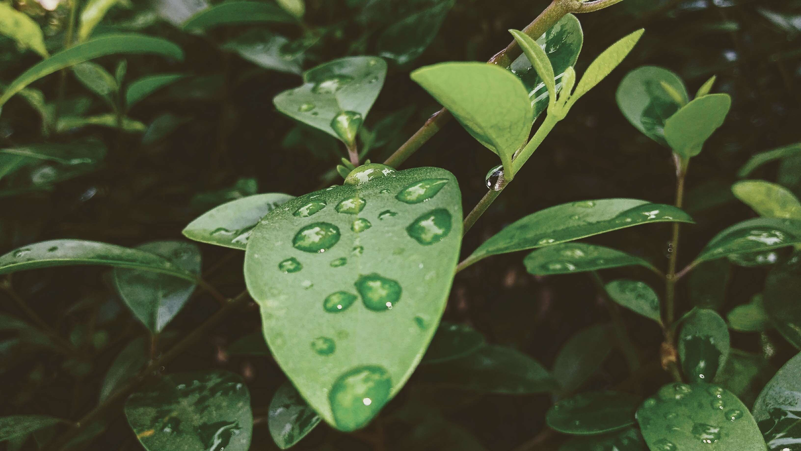 Wallpaper Dark Green Leaf Background
