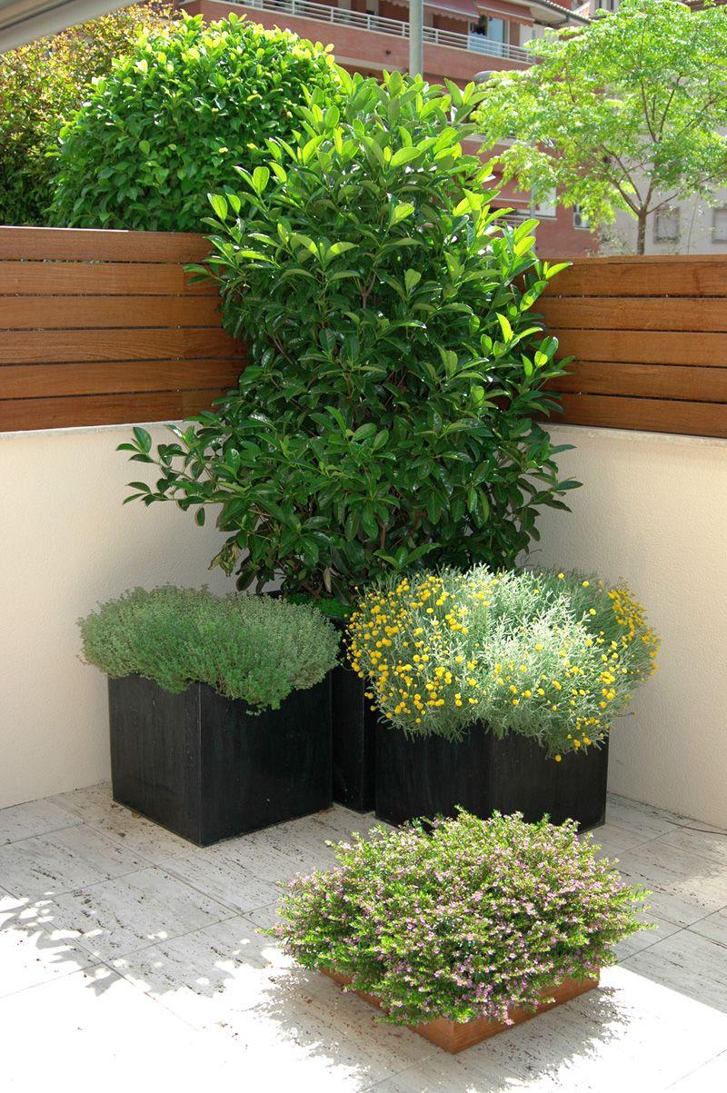 Arbusto Poco Mantenimiento Buscar Con Google Plants Garden Inspiration