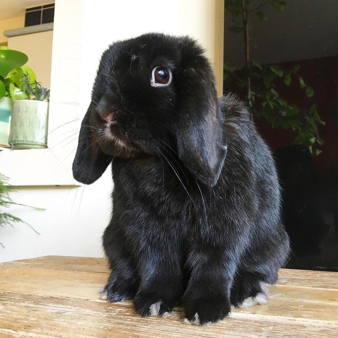 Bunny Buy Online Bunny Buying Websites Bunny Buying Coward Bunny Buying Guide Bunny Buyers Bunny Buy Singapore Bu In 2020 Pet Toys Animated Plush Plush Stuffed Animals