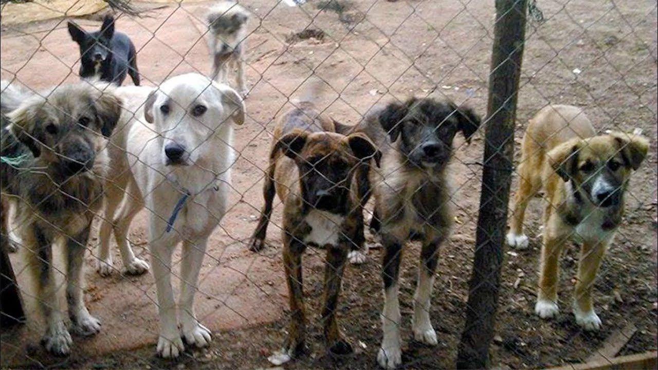 Macedonia's street dog problem | Adopt Don't Shop | Dogs