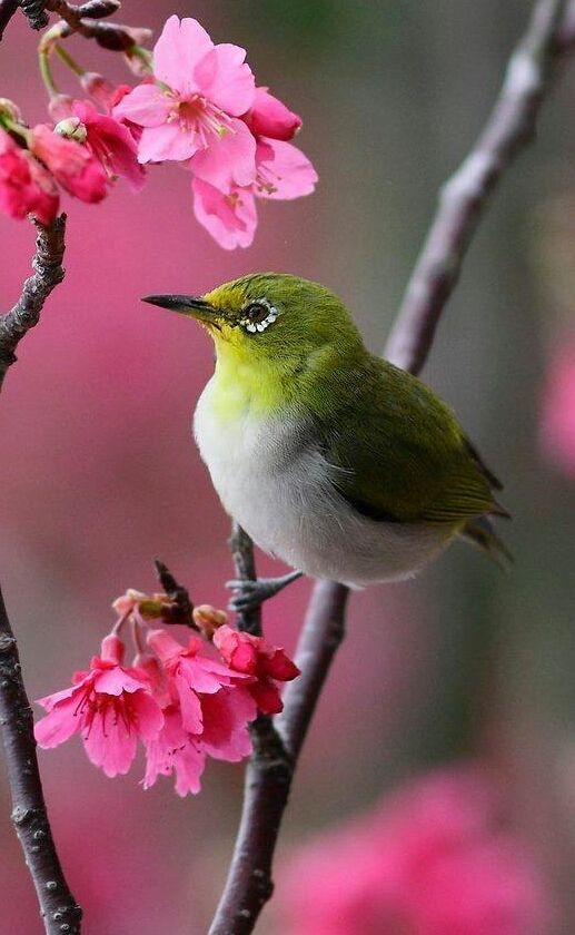 Nature S Garden Of Enchantment Visit Angi S Profile On Pinterest This Notice Is To Inform 美しい鳥 動物 かわいい