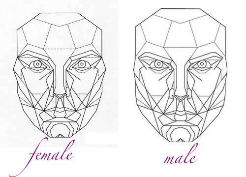 Beauty And The Brain Face Drawing Face Proportions Golden Ratio