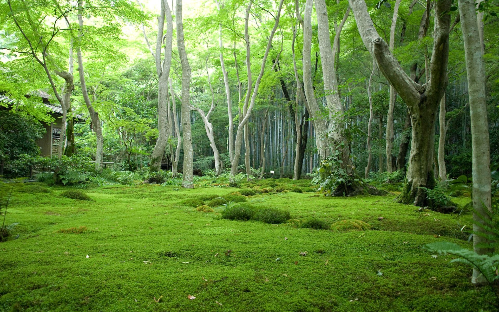 Pin By Bernhard Forcher On Into The Wild Forest Wallpaper Green Nature Forest Background