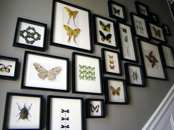 Framed Butterflies Taxidermy Decor Frame Decor Butterfly Frame