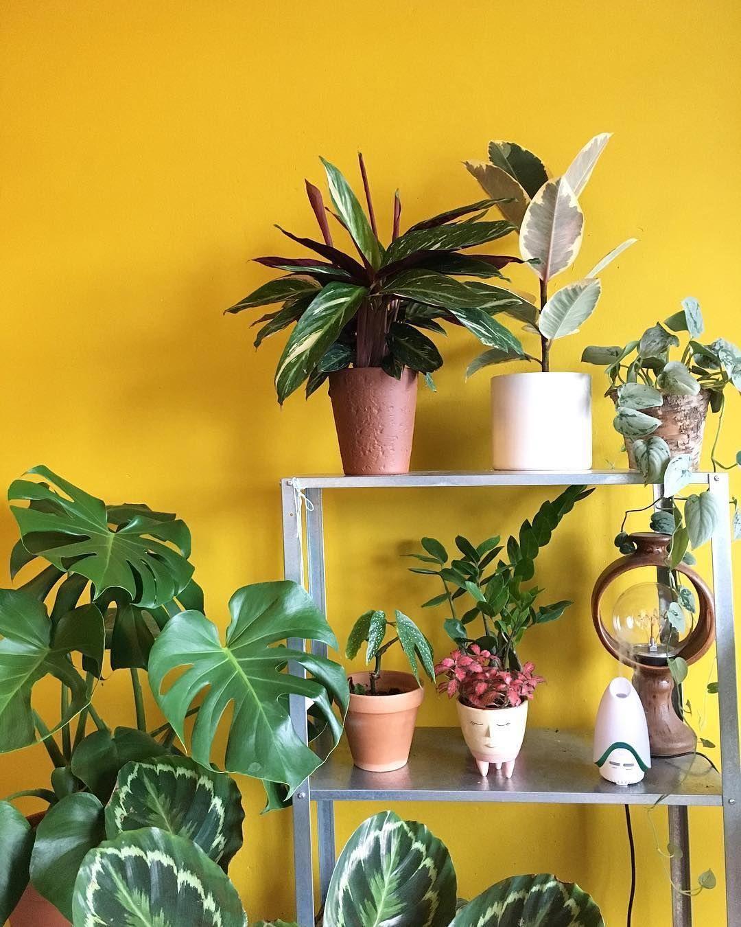 house plant gang