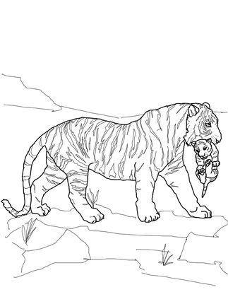 Click To See Printable Version Of Mother Tiger Carrying Cub Coloring Page