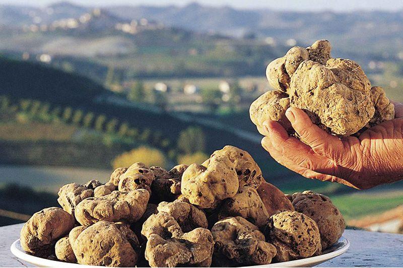 Maior trufa branca da história é achada em Molise - http://chefsdecozinha.com.br/super/noticias-de-gastronomia/maior-trufa-branca-da-historia-e-achada-em-molise/ -