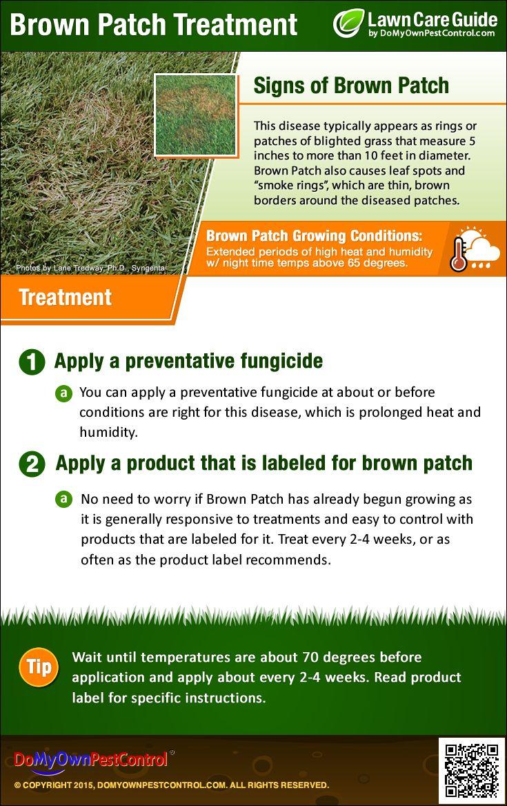 8e7df6c7e29bfbb760204a1806f5ae56 - How To Get Rid Of Clover Patches In Lawn