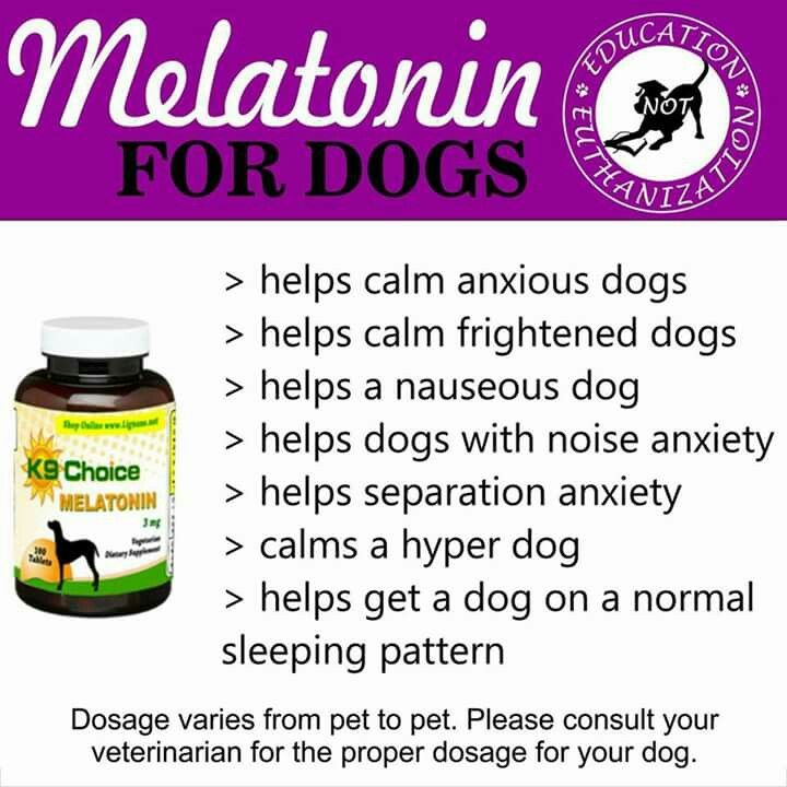 Melatonin For Dogs Tips Pinterest Dogs Pets And Melatonin