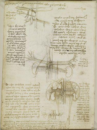 Leonardo da Vinci (Vinci 1452-Amboise 1519) - Recto The heart