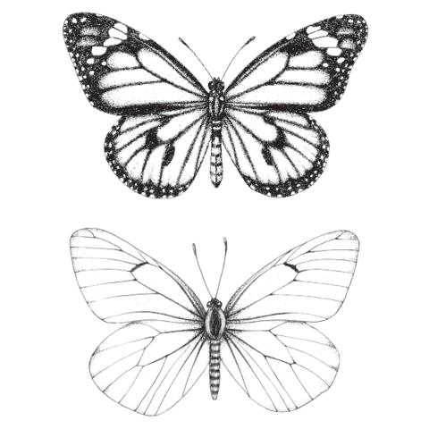 Butterfly Temporary Tattoo Shell Tattoos Classy Tattoos Inspirational Tattoos