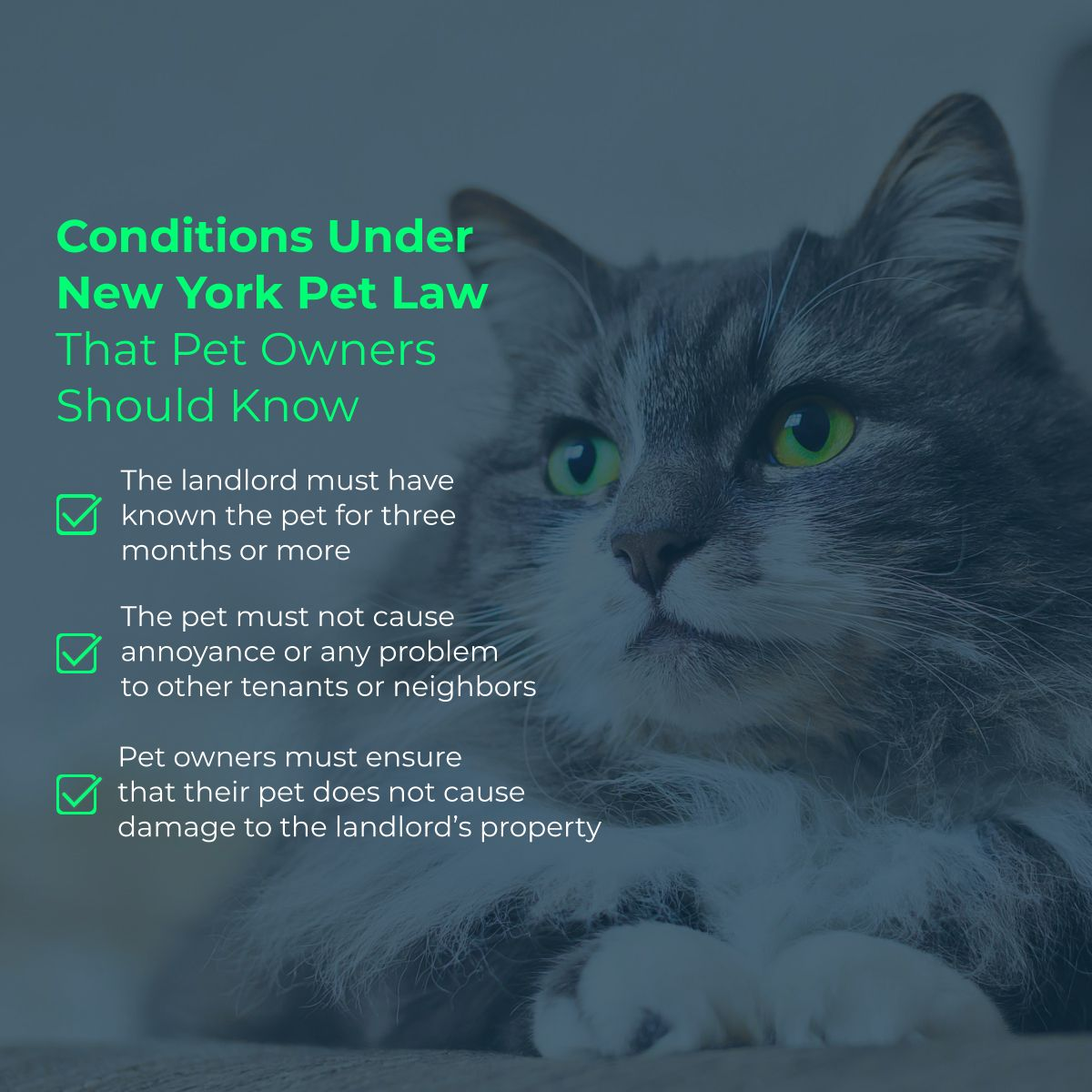 Conditions Under New York Pet Law That Pet Owners Should Know Petowners Theinsuredpet Newyorkpetlaw Pet Insurance Reviews Best Pet Insurance Pets