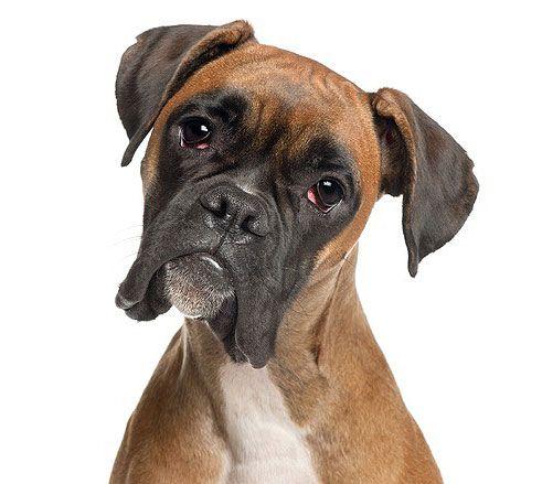 Dog Profile Image ♡ Re Pin By Stoneartusa Com
