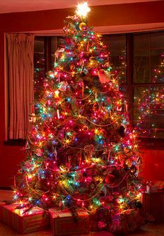 decorated christmas trees with colored lights Rainforest Islands
