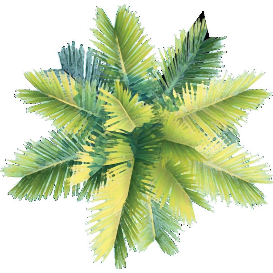 пальма вид сверху картинка
