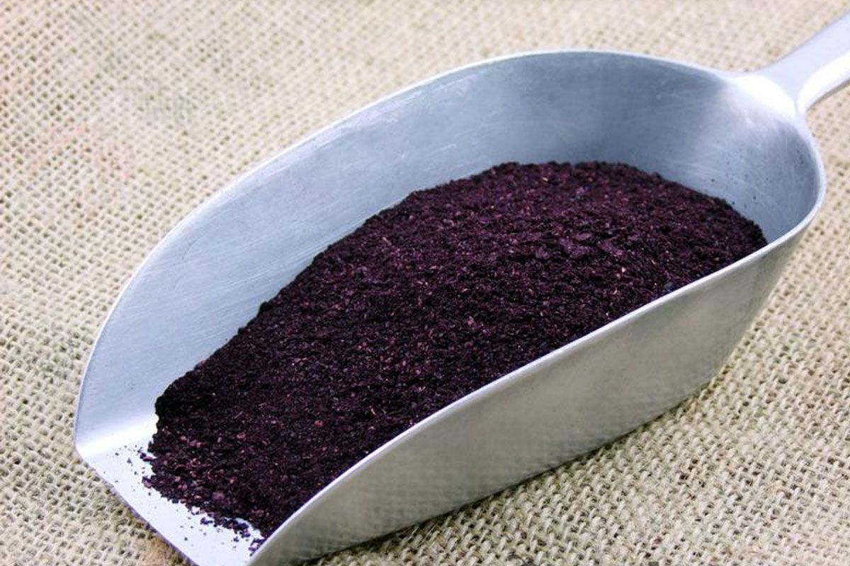 Superfood Feature: The health benefts of Maqui Berry – The Holistic Ingredient