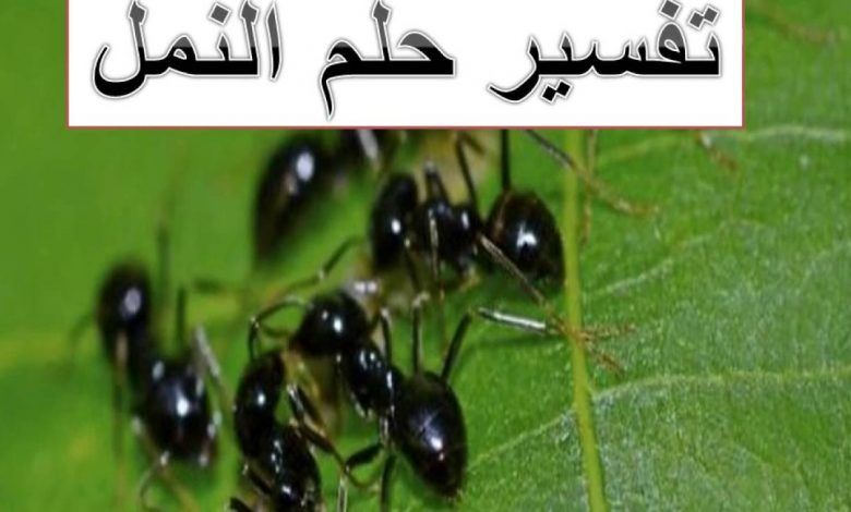 تفسير حلم النمل Ants Dream Interpretation