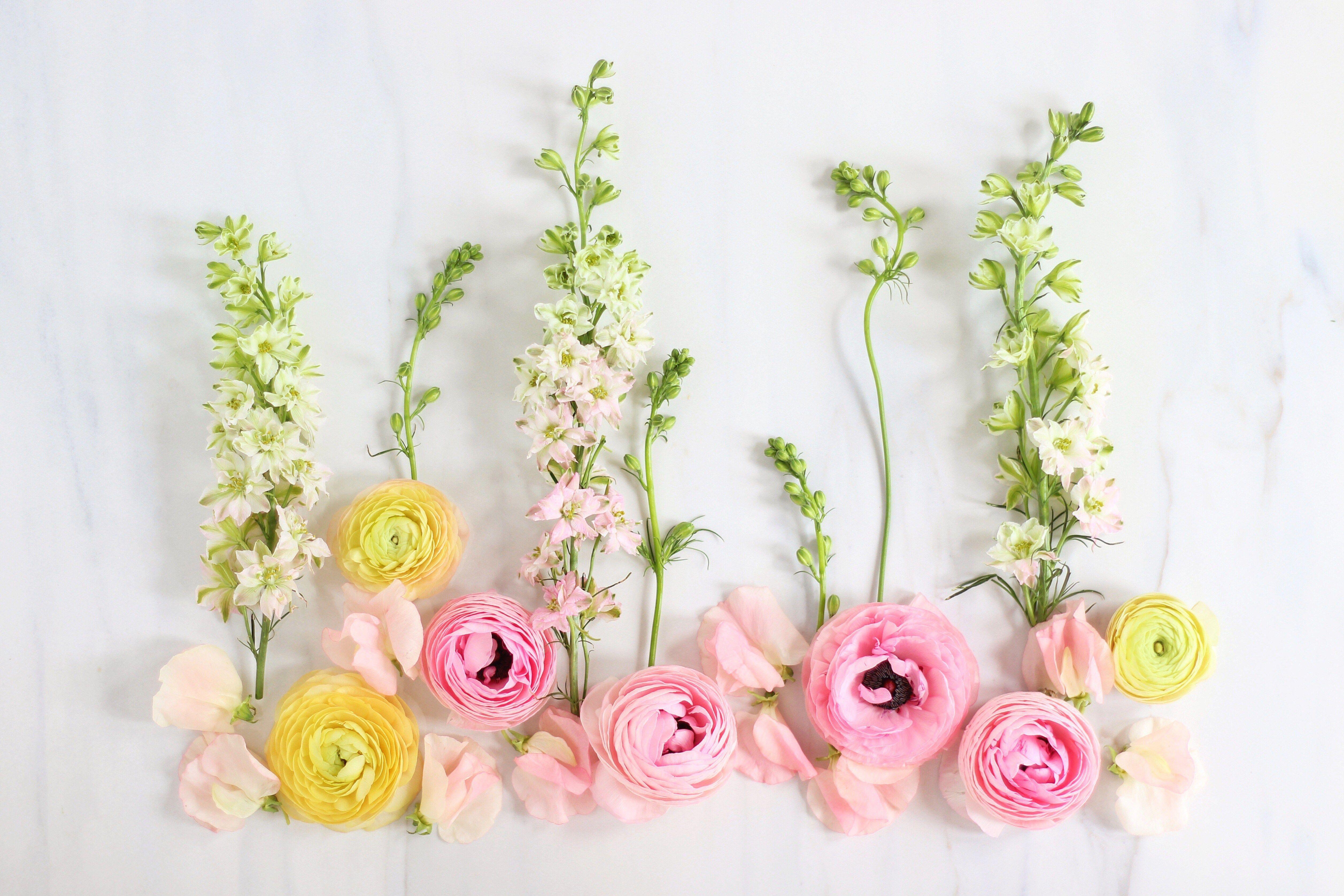 Digital blooms september 2017 wallpapers macbook - Flower wallpaper macbook ...