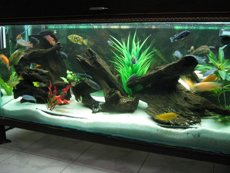 Image result for sand in aquarium ideas pinterest fish for Sand for fish tank