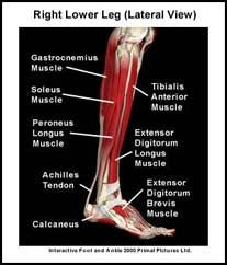 View Of The Right Leg Fyi The Thigh Is The Term For Your Upper Leg