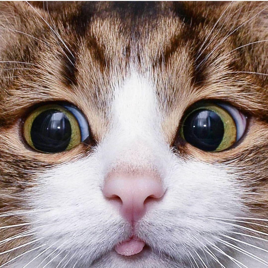 Cutest Funny Animals Cutest Funny Animals Instagram Posts Videos Stories On Webstaqram Com Webstaqram Cutest Funny Animals Funny L Cute Cats Kittens Cutest Crazy Cats