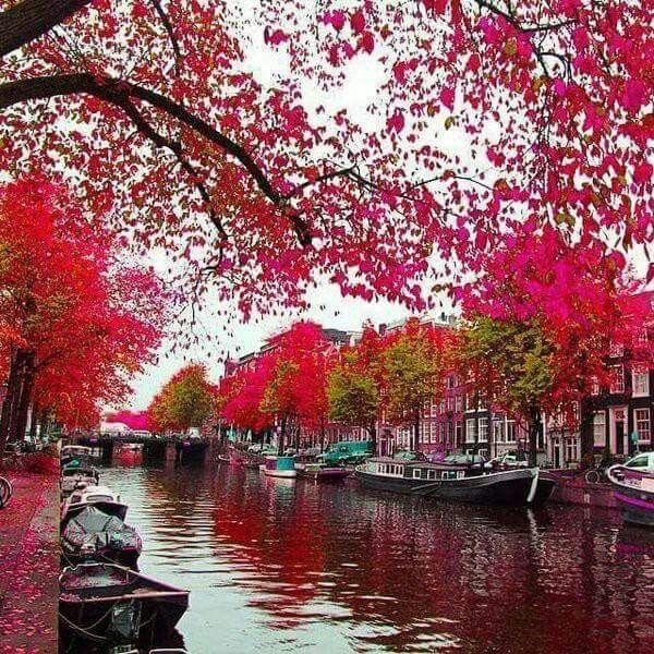 Pink Autumn In Bruge Belgium
