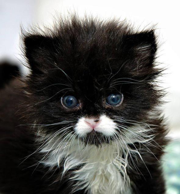 Andy [redux] kitten
